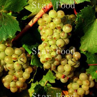 Вино Алиготе в ассортименте